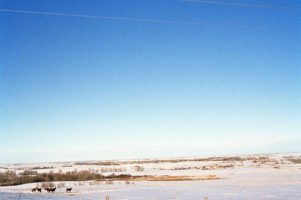 Horses, Alberta, 2013